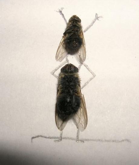 dead-fly-art-02