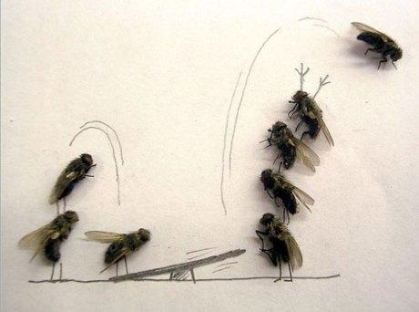 dead-fly-lead1