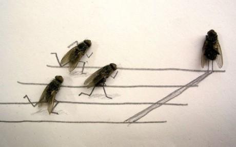 dead_flies_art_01-510x318
